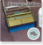 small-bottom-button-for-carpet-cleaning-page_04